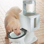 WC:n näköinen koiranjuottoastia