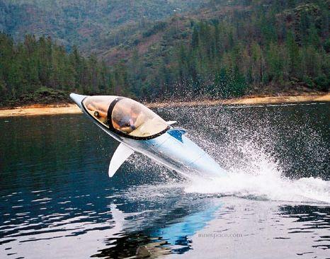delfini_vene.jpg