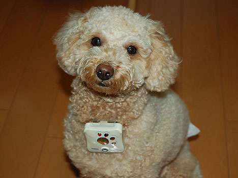 Koirakamera - digikamera koirille