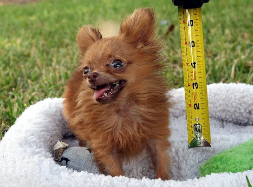 smallest-dog.jpg