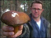 _42902987_stefan_mushroom203.jpg