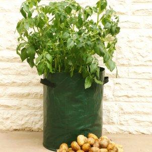 Kasvata ruokaperunat kotona