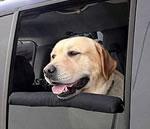 dog-travel-pillow.jpg