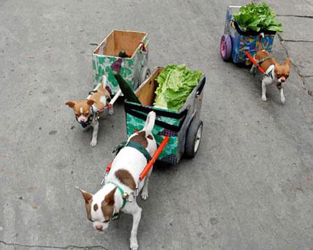 dogslettuceap_450×359.jpg