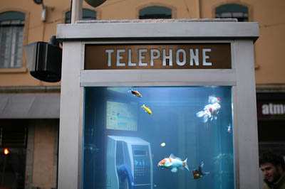 fish-get-a-new-home-in-unused-phone-booths.jpg
