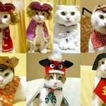Kissoille vaatteita