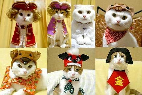 kissoille-vaatteita.jpg