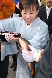 Karpeille juotetaan sakea Japanissa