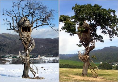 Japanilaisia puumajoja