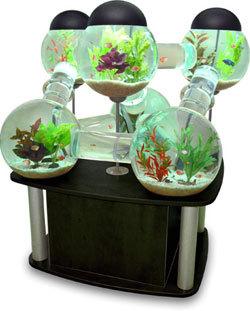 The Silverfish Aquarium tarjoaa luksusta kultakaloille