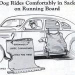 Koira pussiin ja pussi auton kylkeen roikkumaan