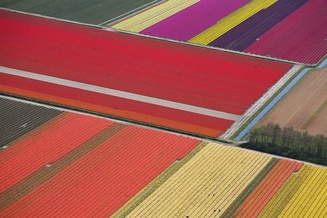 Tulppaaneja Hollannissa