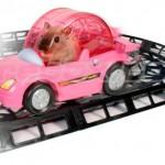 Polkuautorata hamstereille