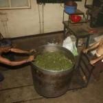 Sri Lanka aikoo kasvattaa marihuanaa lääketarkoituksiin