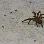 Virtuaalihämähäkki, jota voi muokata, ruokkia ja hätyyttää