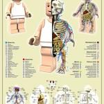 Lego Minifig -ukon anatomia