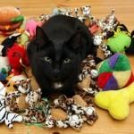 Frankie kerää pehmoleluja ja kuolleita eläimiä