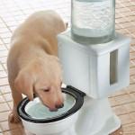 Vessanpönttö -koiran juottoautomaatti