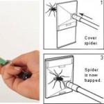 Bug Trapper saalistaa hyönteiset humaanisti