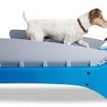 The Canine Treadmill – koiran juoksumatto