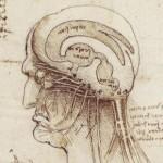 """Tiedemiehet kehittävät tunteisiin vaikuttavaa """"rakkaussuihketta"""""""