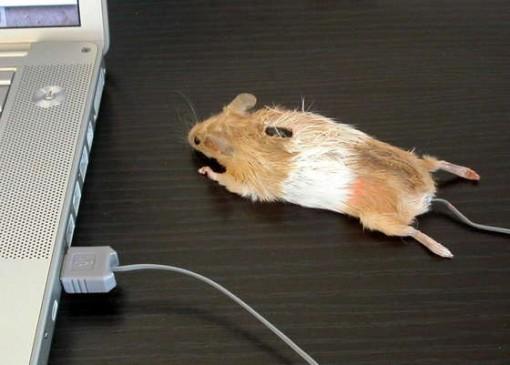 Mouse Mouse! on hiiri, joka on hiiri! 1