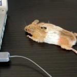Mouse Mouse! on hiiri, joka on hiiri!