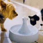 Drinkwell 360 on juomalähde elukoille