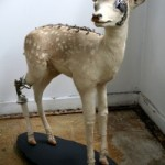 """Lisa Black luo täytetyistä eläimistä ja metalliromusta """"bionisia taideteoksia"""""""