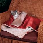 Lämpiävä peitto kissalle
