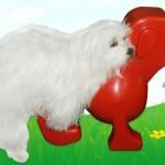 DoggieLoverDoll on seksilelu koirille