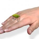 Todellinen viherpiipertäjän sormus