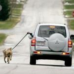 Tutkimus: Koiran ekologinen jalanjälki vastaa kahta katumaasturia
