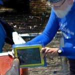 Delfiinit oppivat kommunikoimaan ihmisten kanssa Applen iPadin välityksellä