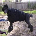 Koiran muuntumisleikki -paketti herättää ajatuksia