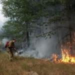 Metsäpaloja sammuttamassa