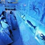 Kori no Suizokukan on japanilainen pakastekala-akvaario