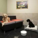 Actuel Dogs on Euroopan ensimmäinen neljän tähden hotelli koirille