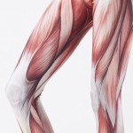 musclelegs-detail-Edit