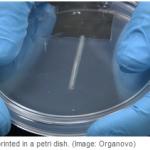 Maailman ensimmäinen 3D-tulostettu elin julki mahdollisesti ensi vuonna