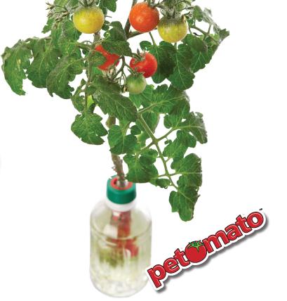 petomato_002