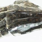 Tutkijat kehittävät venyvää keinotekoista ihoa, joka antaisi proteeseille tuntoaistin