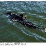 GhostSwimmer – Yhdysvaltojen laivaston uusi vakoilulaite muistuttaa haikalaa