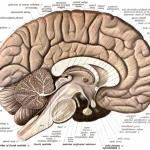 Uusi tutkimus esittelee, kuinka helppoa ihmisen muistia on mainipuloida