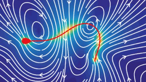 Siittiön potkimisliike luo siemennesteeseen magneettikenttämäisen liikeratakuvion