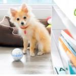 Pebby on interaktiivinen lemmikin lelupallo – Videokuvaa, etäohjausta, puhetta