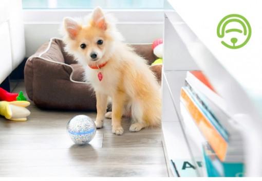 Pebby-pallo ja koira