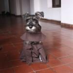 Luostari adoptoi koiran, nyt elämä on mukavampaa