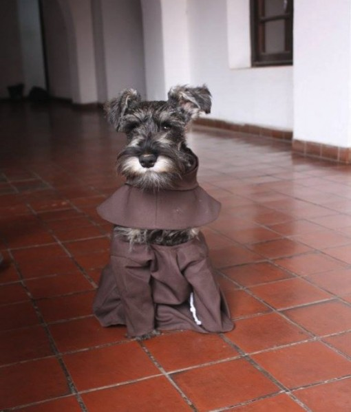 "Friar Bigotón, ""luostariveli viiksekäs"""