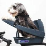 Buddyrider on koiranistuin pyörään, hyvin suunniteltu